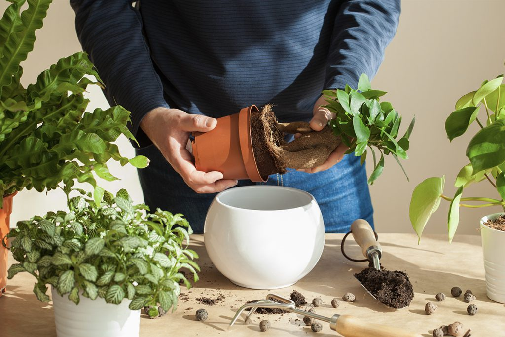 Top Tips for looking after Houseplants