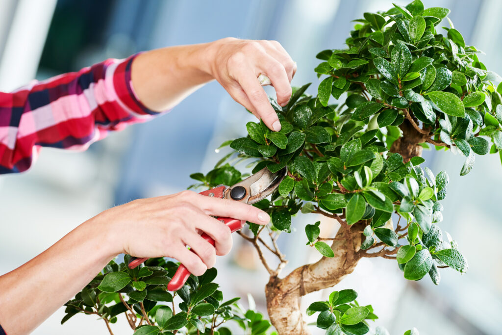 Houseplant trimming how to trim your houseplants