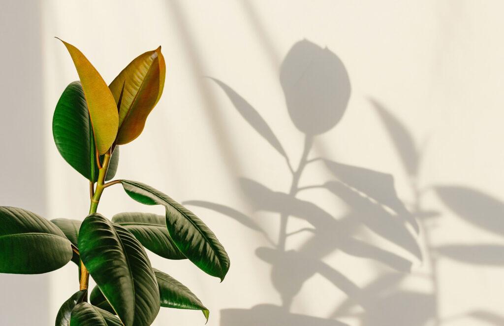 Light Requirements of Houseplants